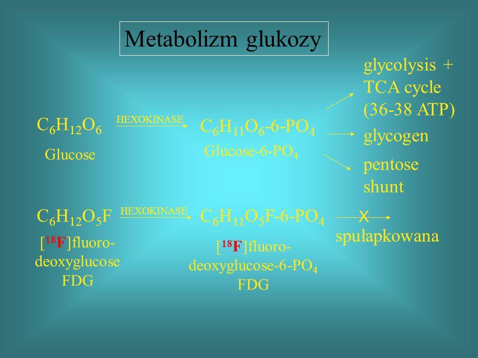 glycolysis + TCA cycle (36-38 ATP) glycogen pentose shunt spułapkowana C 6 H 12 O 6 HEXOKINASE Glucose C 6 H 11 O 6 -6-PO 4 Glucose-6-PO 4 C 6 H 12 O