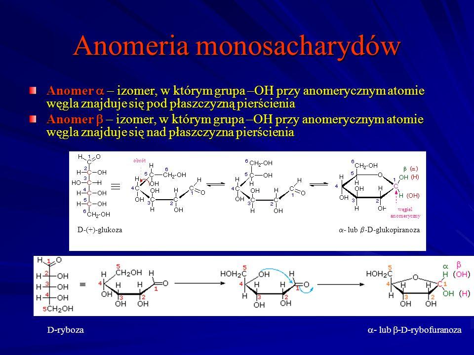 Anomeria monosacharydów Anomer – izomer, w którym grupa –OH przy anomerycznym atomie węgla znajduje się pod płaszczyzną pierścienia Anomer – izomer, w którym grupa –OH przy anomerycznym atomie węgla znajduje się nad płaszczyzna pierścienia D-(+)-glukoza - lub -D-glukopiranoza węgiel anomeryczny obrót D-ryboza - lub -D-rybofuranoza
