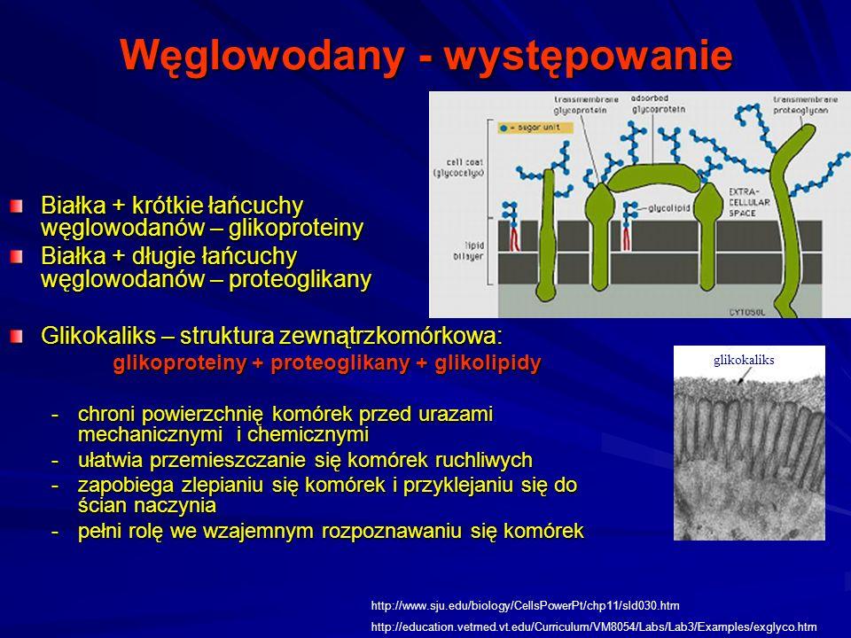 Węglowodany - występowanie Białka + krótkie łańcuchy węglowodanów – glikoproteiny Białka + długie łańcuchy węglowodanów – proteoglikany Glikokaliks – struktura zewnątrzkomórkowa: glikoproteiny + proteoglikany + glikolipidy -chroni powierzchnię komórek przed urazami mechanicznymi i chemicznymi -ułatwia przemieszczanie się komórek ruchliwych -zapobiega zlepianiu się komórek i przyklejaniu się do ścian naczynia -pełni rolę we wzajemnym rozpoznawaniu się komórek http://www.sju.edu/biology/CellsPowerPt/chp11/sld030.htm http://education.vetmed.vt.edu/Curriculum/VM8054/Labs/Lab3/Examples/exglyco.htm glikokaliks
