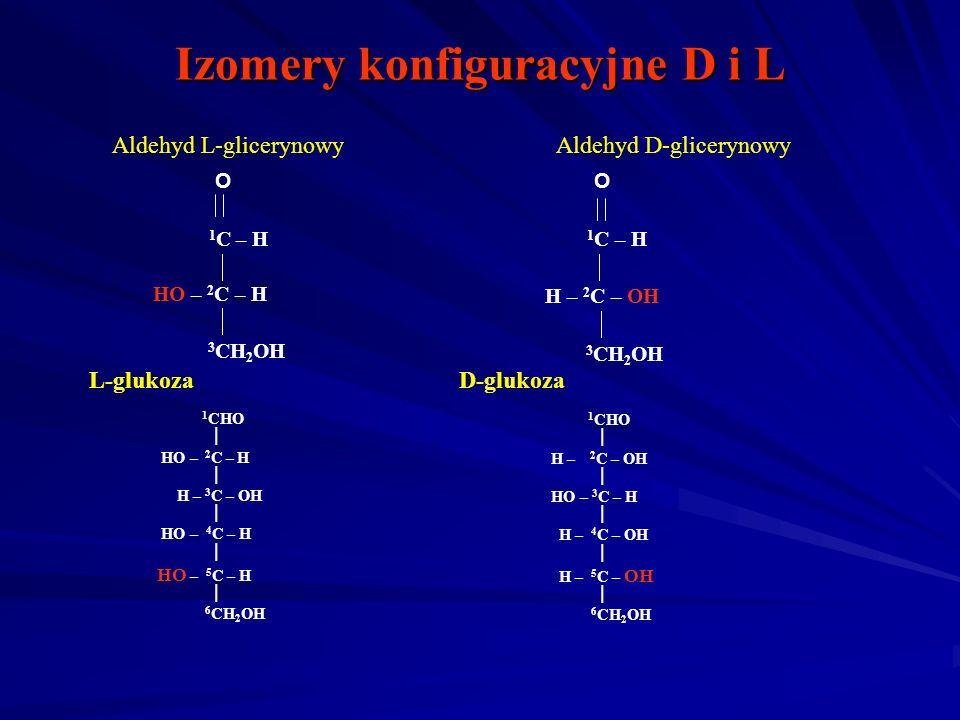 Izomery konfiguracyjne D i L O 1 C – H HO – 2 C – H 3 CH 2 OH Aldehyd L-glicerynowy O 1 C – H H – 2 C – OH 3 CH 2 OH Aldehyd D-glicerynowy 1 CHO HO – 2 C – H H – 3 C – OH HO – 4 C – H HO – 5 C – H 6 CH 2 OH 1 CHO H – 2 C – OH HO – 3 C – H H – 4 C – OH H – 5 C – OH 6 CH 2 OH L-glukozaD-glukoza