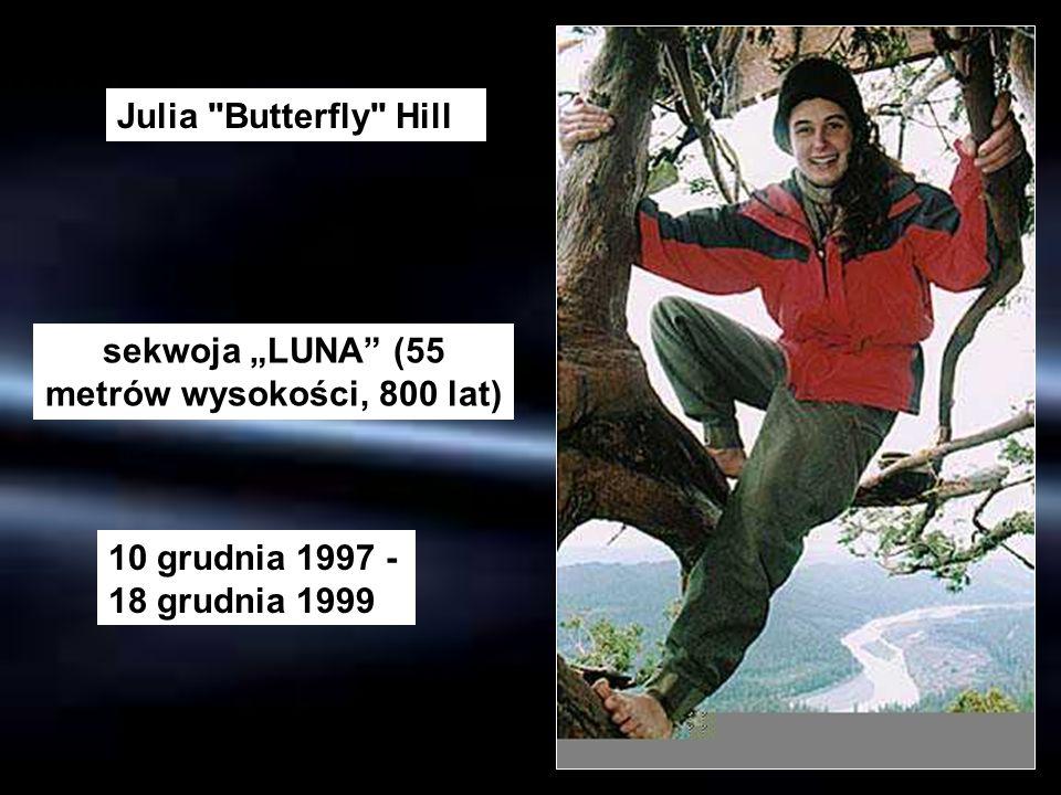 sekwoja LUNA (55 metrów wysokości, 800 lat) Julia
