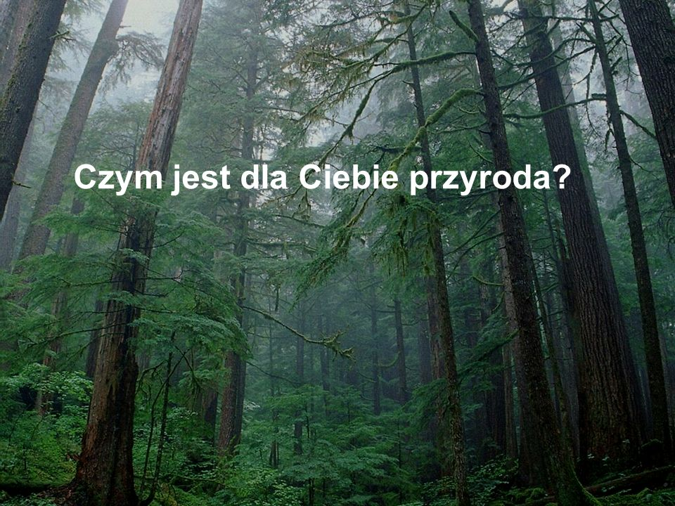 http://www.ecosystems.sk/gal_pages/hroncecky_grun_porast1_v3.jpg_tn.html Mity o martwym drewnie Mit 1.