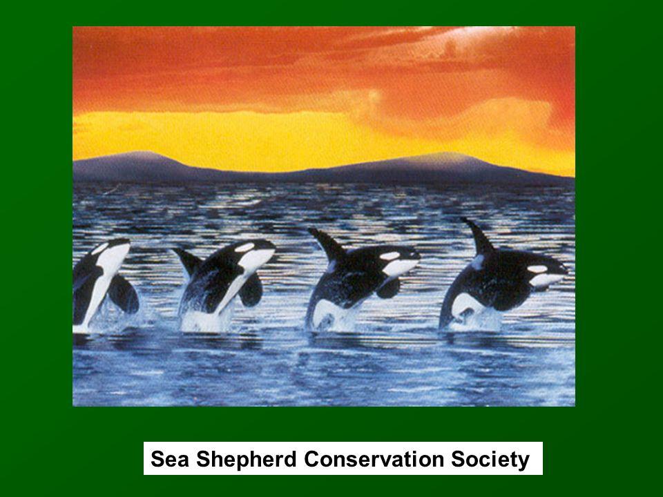 Sea Shepherd Conservation Society