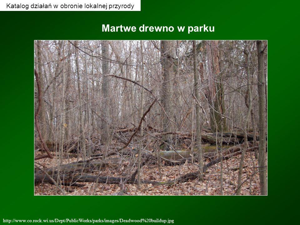 http://www.co.rock.wi.us/Dept/PublicWorks/parks/images/Deadwood%20buildup.jpg Martwe drewno w parku