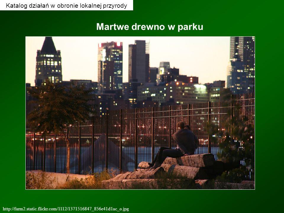 Katalog działań w obronie lokalnej przyrody http://farm2.static.flickr.com/1112/1371516847_856e41d1ac_o.jpg Martwe drewno w parku