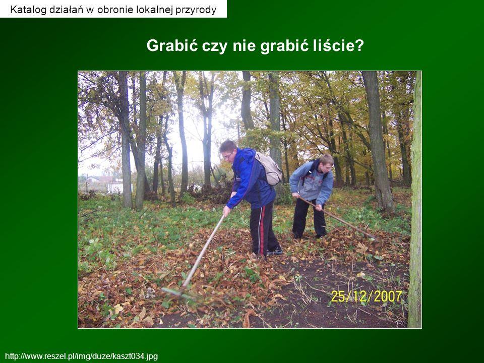 http://www.reszel.pl/img/duze/kaszt034.jpg Grabić czy nie grabić liście?