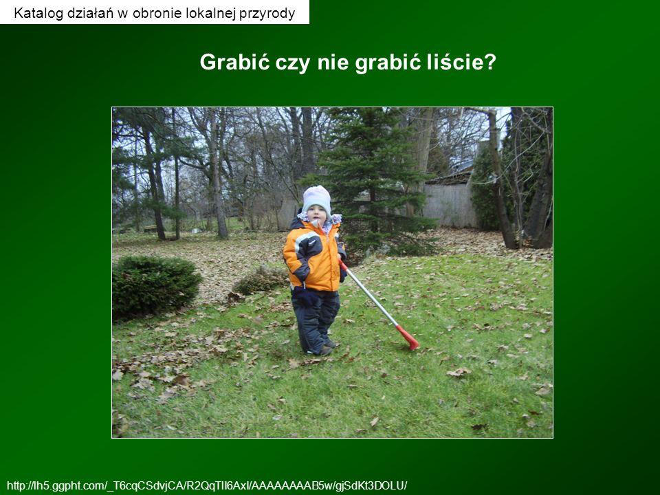 Katalog działań w obronie lokalnej przyrody http://lh5.ggpht.com/_T6cqCSdvjCA/R2QqTlI6AxI/AAAAAAAAB5w/gjSdKt3DOLU/ Grabić czy nie grabić liście?