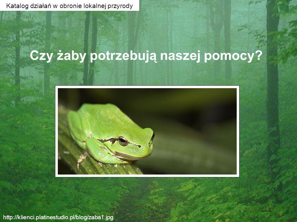 Czy żaby potrzebują naszej pomocy? http://klienci.platinestudio.pl/blog/zaba1.jpg Katalog działań w obronie lokalnej przyrody