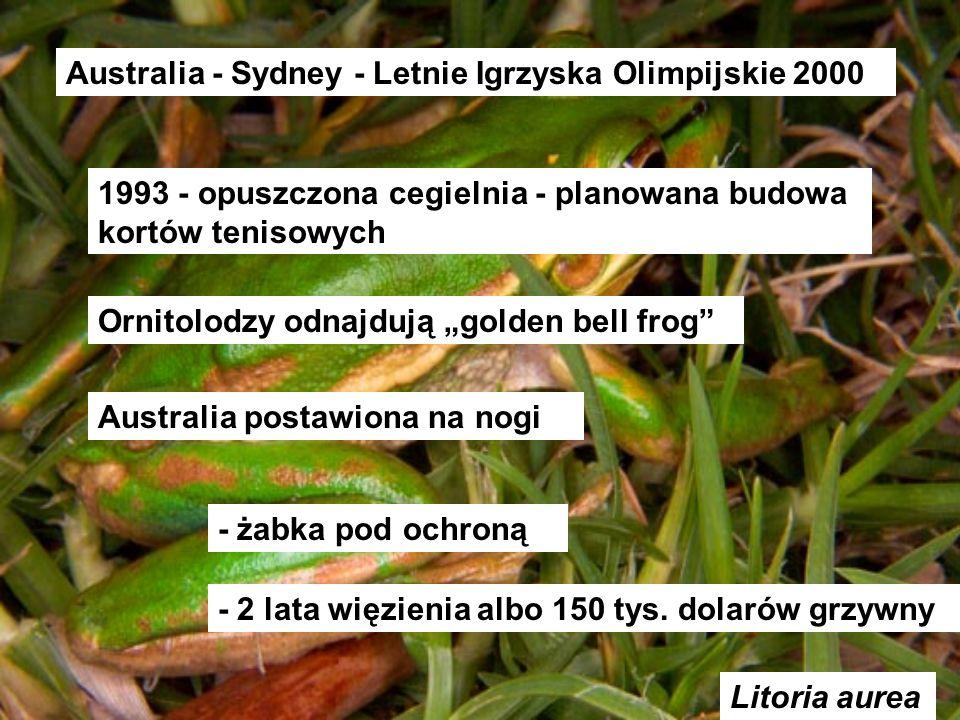 Litoria aurea Australia - Sydney - Letnie Igrzyska Olimpijskie 2000 1993 - opuszczona cegielnia - planowana budowa kortów tenisowych Ornitolodzy odnaj