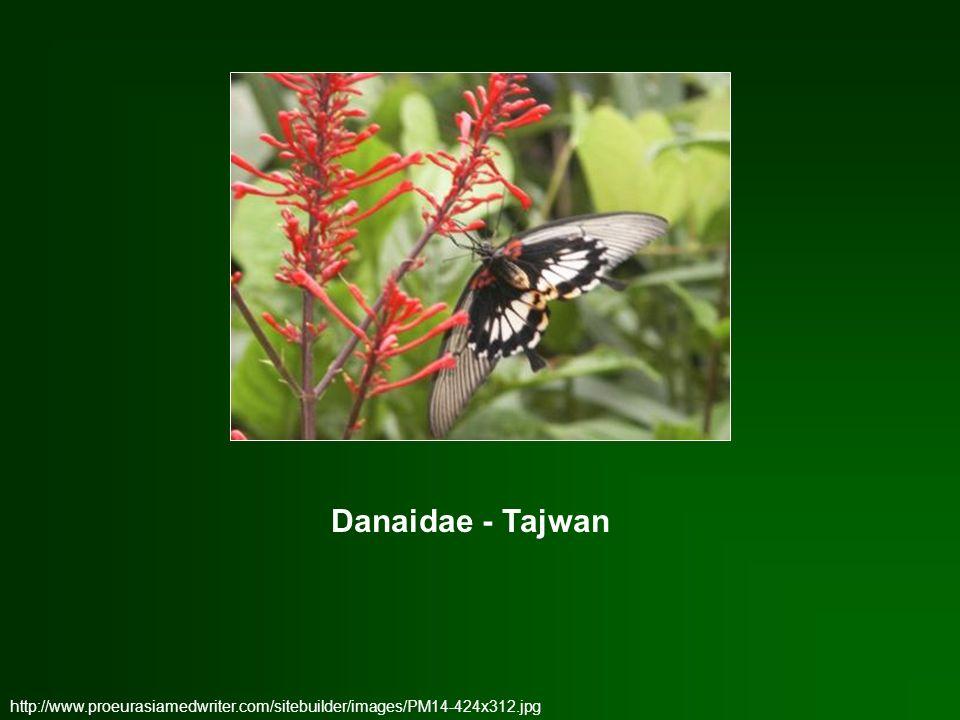http://www.proeurasiamedwriter.com/sitebuilder/images/PM14-424x312.jpg Danaidae - Tajwan
