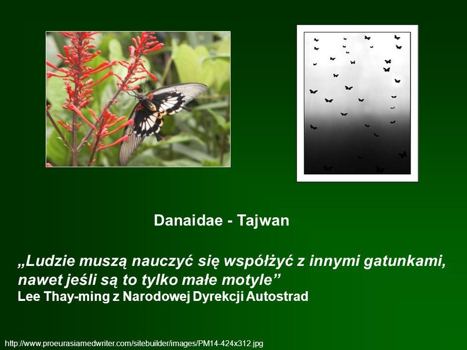 http://www.proeurasiamedwriter.com/sitebuilder/images/PM14-424x312.jpg Danaidae - Tajwan Ludzie muszą nauczyć się współżyć z innymi gatunkami, nawet j