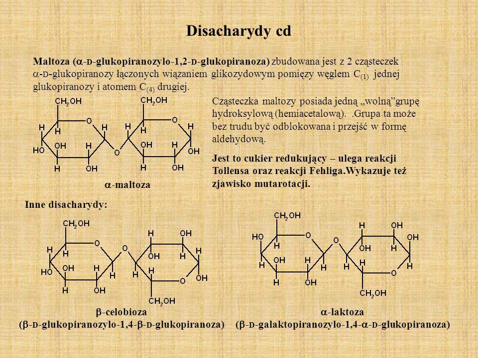 Disacharydy cd Maltoza ( - D -glukopiranozylo-1,2- D -glukopiranoza) zbudowana jest z 2 cząsteczek - D -glukopiranozy łączonych wiązaniem glikozydowym pomięzy węglem C (1) jednej glukopiranozy i atomem C (4) drugiej.
