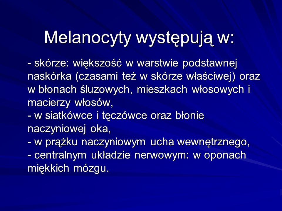 Melanocyty występują w: - skórze: większość w warstwie podstawnej naskórka (czasami też w skórze właściwej) oraz w błonach śluzowych, mieszkach włosow