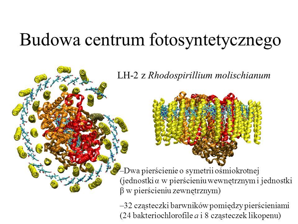 Budowa centrum fotosyntetycznego LH-2 z Rhodospirillium molischianum –Dwa pierścienie o symetrii ośmiokrotnej (jednostki α w pierścieniu wewnętrznym i
