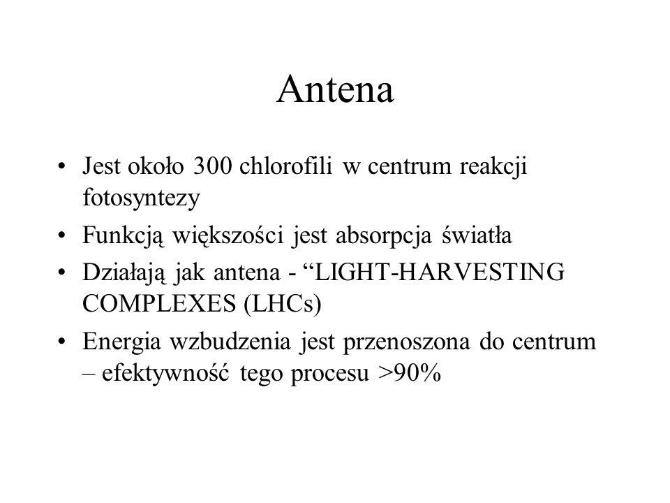 Antena Jest około 300 chlorofili w centrum reakcji fotosyntezy Funkcją większości jest absorpcja światła Działają jak antena - LIGHT-HARVESTING COMPLE