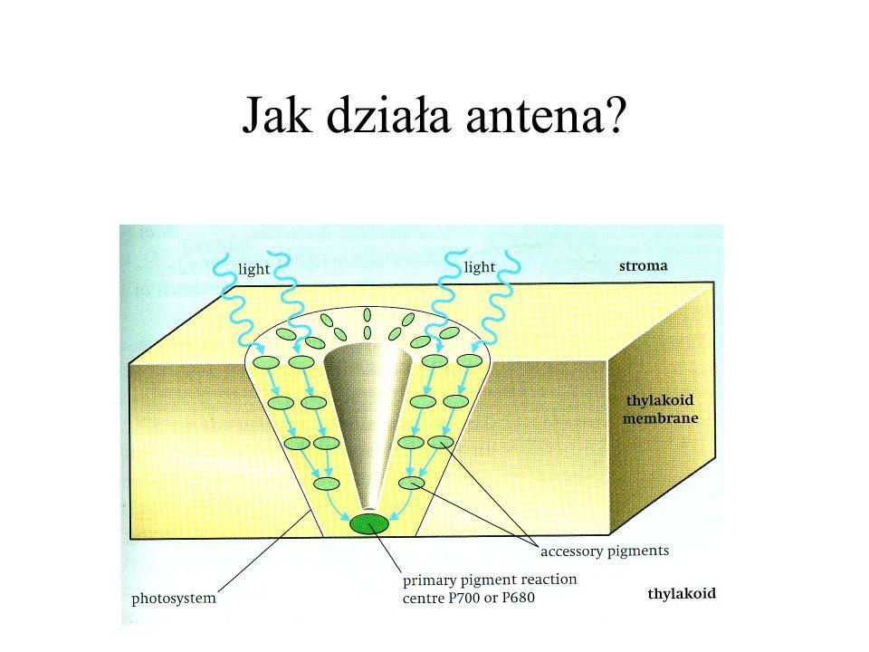 Jak działa antena?