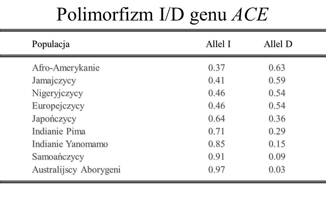 Polimorfizm I/D genu ACE PopulacjaAllel IAllel D Afro-Amerykanie 0.37 0.63 Jamajczycy 0.41 0.59 Nigeryjczycy 0.46 0.54 Europejczycy 0.46 0.54 Japończy