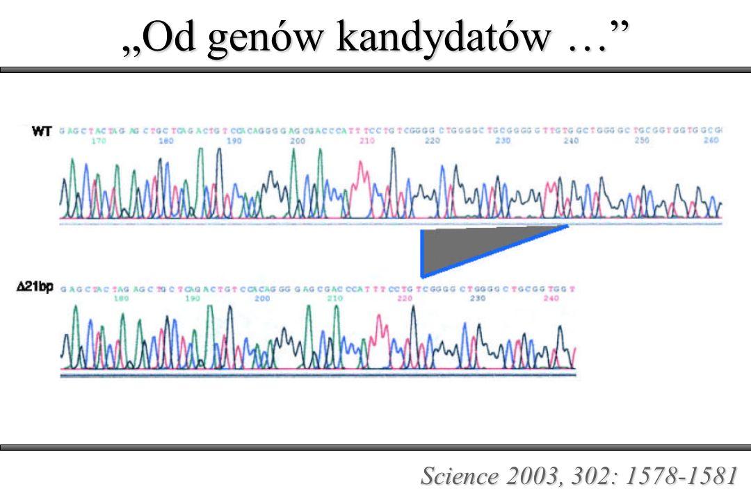 Science 2003, 302: 1578-1581 Od genów kandydatów …