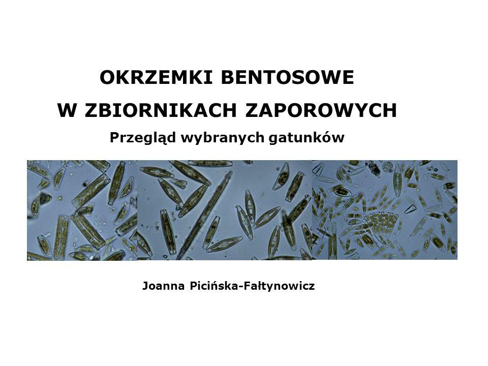 OKRZEMKI BENTOSOWE W ZBIORNIKACH ZAPOROWYCH Przegląd wybranych gatunków Joanna Picińska-Fałtynowicz