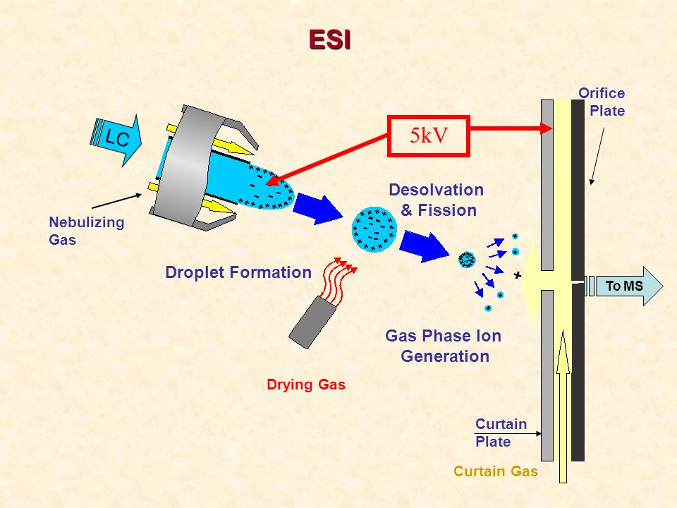 To MS Orifice Plate Curtain Plate Drying Gas Curtain Gas LC Droplet Formation Desolvation & Fission Gas Phase Ion Generation 5kV Nebulizing Gas ESI