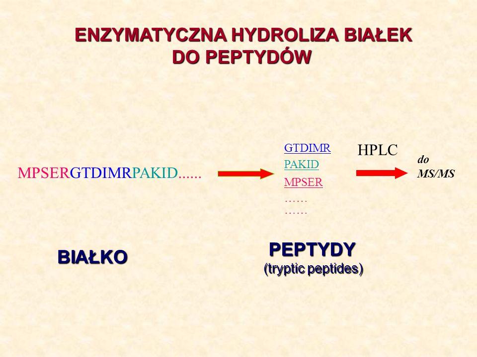 MPSER …… GTDIMR PAKID …… HPLC do MS/MS MPSERGTDIMRPAKID...... BIAŁKO PEPTYDY PEPTYDY (tryptic peptides) ENZYMATYCZNA HYDROLIZA BIAŁEK DO PEPTYDÓW DO P