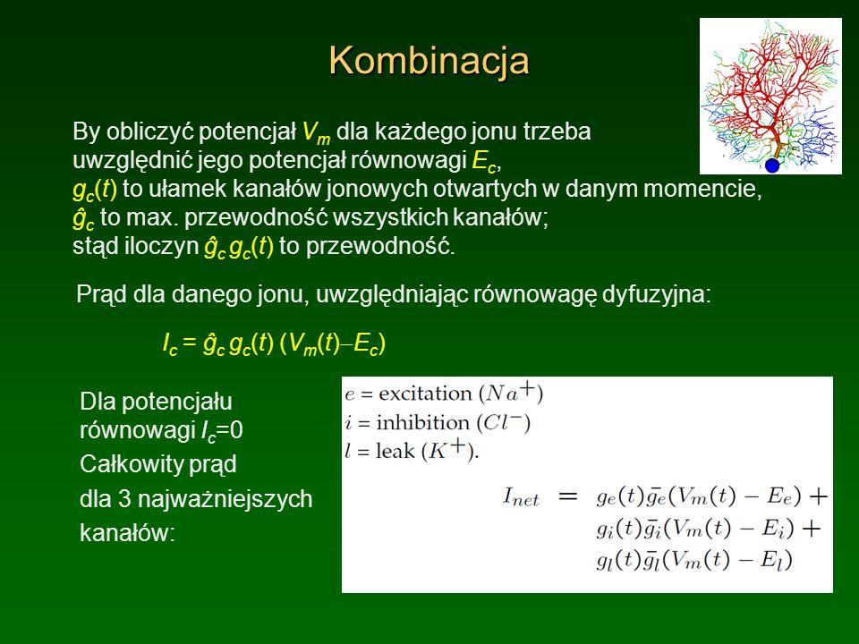 Kombinacja By obliczyć potencjał V m dla każdego jonu trzeba uwzględnić jego potencjał równowagi E c, g c (t) to ułamek kanałów jonowych otwartych w d