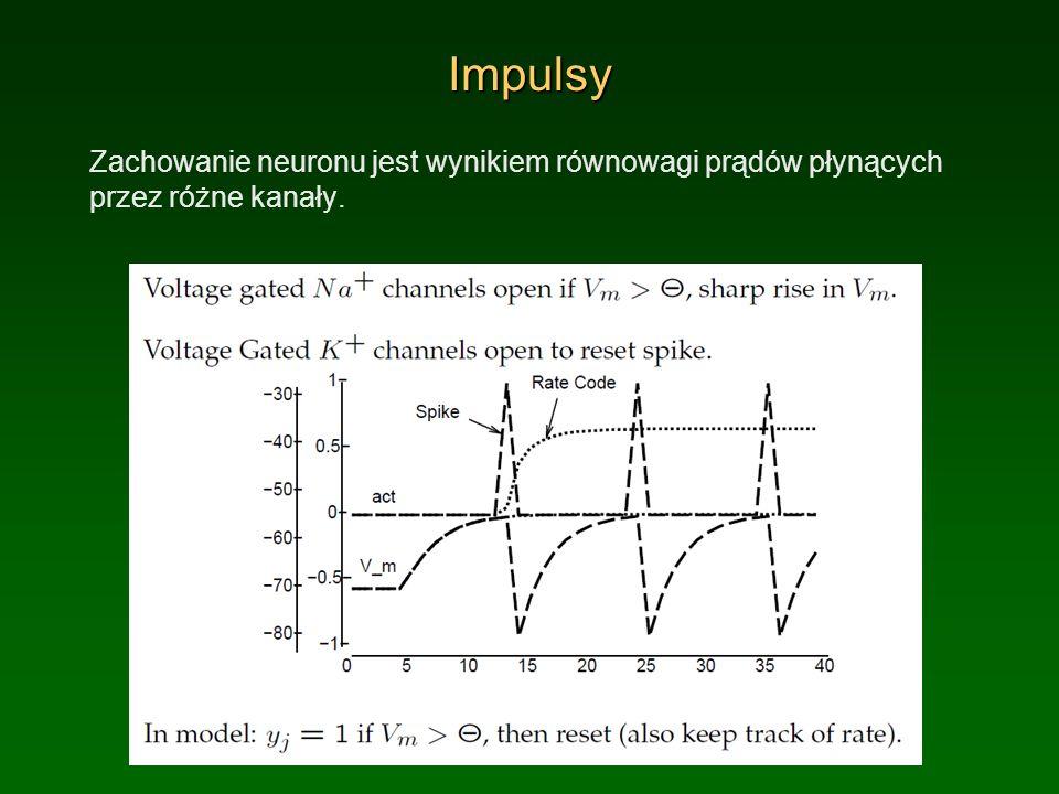 Impulsy Zachowanie neuronu jest wynikiem równowagi prądów płynących przez różne kanały.