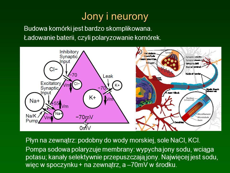 Jony i neurony Budowa komórki jest bardzo skomplikowana. Ładowanie baterii, czyli polaryzowanie komórek. Płyn na zewnątrz: podobny do wody morskiej, s
