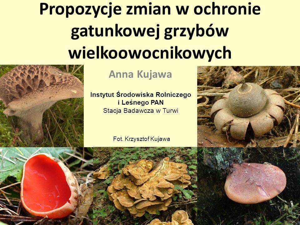 Pigułka podstawowych wiadomości Liczba gatunków stwierdzonych w Polsce: około 4250 (+1000) Liczba gatunków chronionych: 95 Liczba gatunków zagrożonych (czerwona lista 2006): około 1000 ozorek dębowy (Fistulina hepatica) CH, R