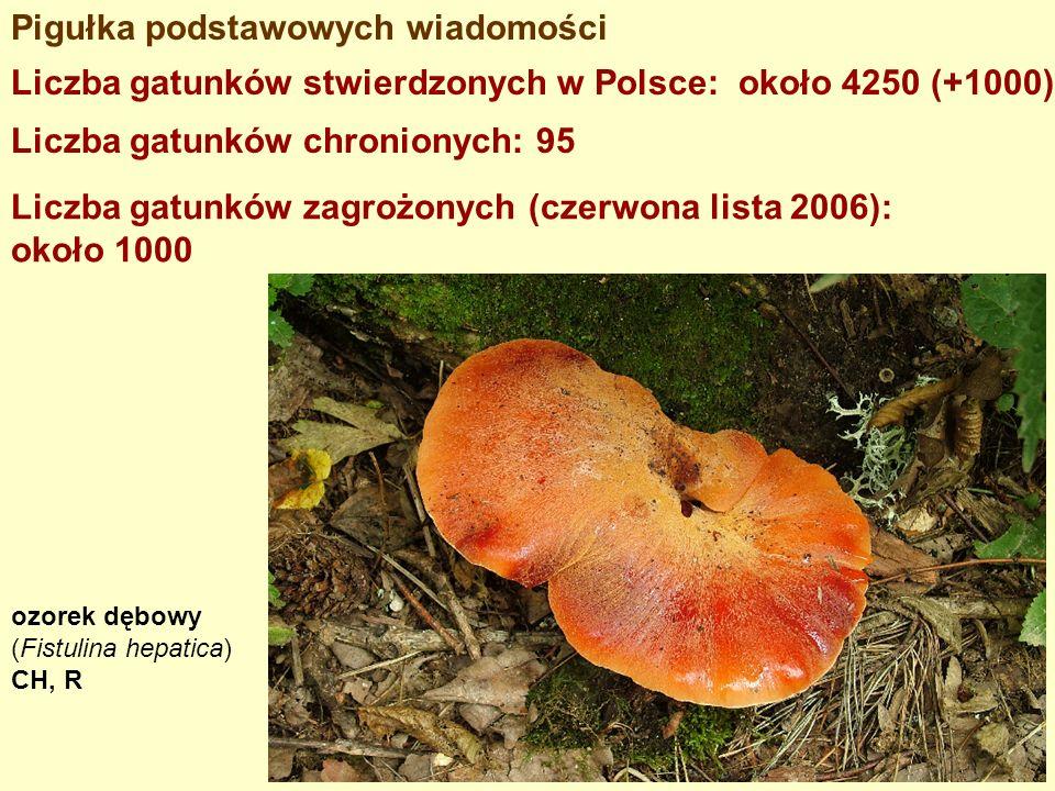 Pigułka podstawowych wiadomości Liczba gatunków stwierdzonych w Polsce: około 4250 (+1000) Liczba gatunków chronionych: 95 Liczba gatunków zagrożonych