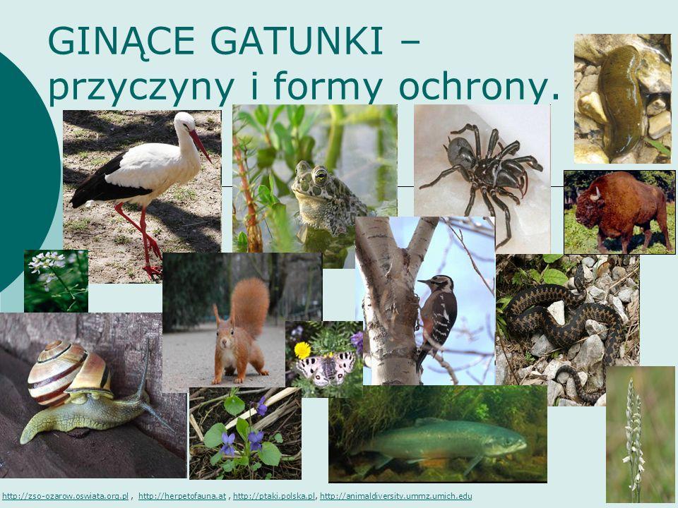 GINĄCE GATUNKI – przyczyny i formy ochrony. http://zso-ozarow.oswiata.org.plhttp://zso-ozarow.oswiata.org.pl, http://herpetofauna.at, http://ptaki.pol
