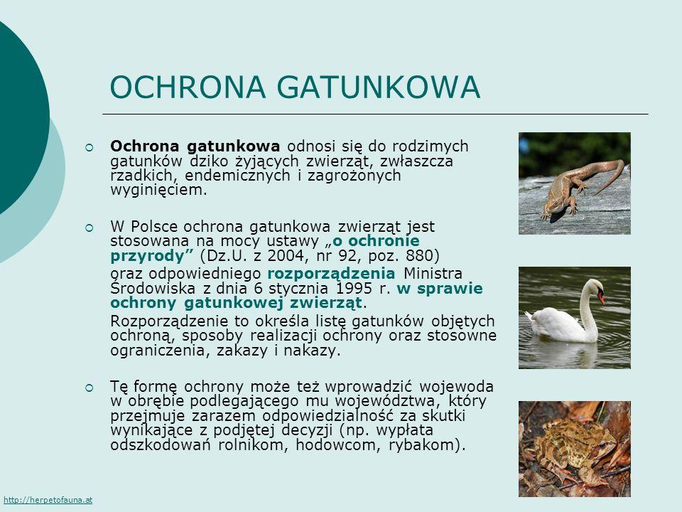 OCHRONA GATUNKOWA Ochrona gatunkowa odnosi się do rodzimych gatunków dziko żyjących zwierząt, zwłaszcza rzadkich, endemicznych i zagrożonych wyginięci
