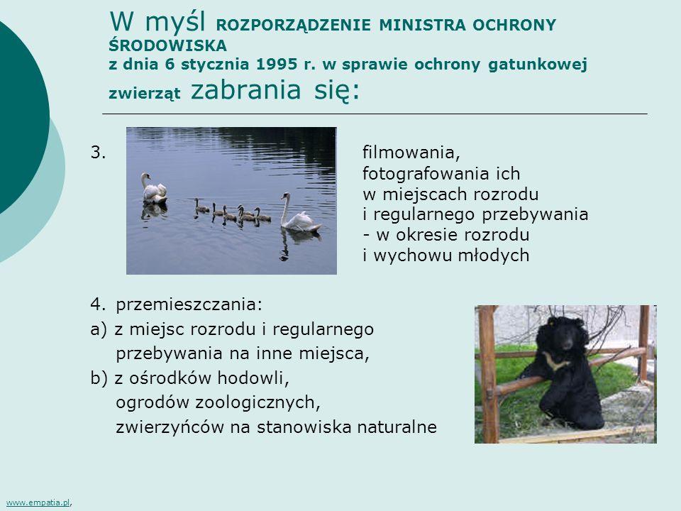 W myśl ROZPORZĄDZENIE MINISTRA OCHRONY ŚRODOWISKA z dnia 6 stycznia 1995 r. w sprawie ochrony gatunkowej zwierząt zabrania się: 3.filmowania, fotograf