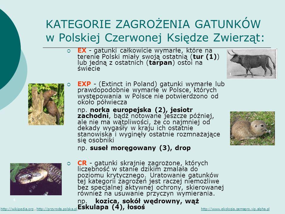 KATEGORIE ZAGROŻENIA GATUNKÓW w Polskiej Czerwonej Księdze Zwierząt: EX - gatunki całkowicie wymarłe, które na terenie Polski miały swoją ostatnią (tu