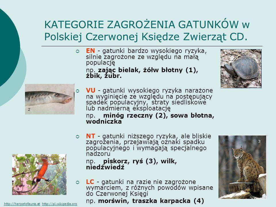 KATEGORIE ZAGROŻENIA GATUNKÓW w Polskiej Czerwonej Księdze Zwierząt CD. EN - gatunki bardzo wysokiego ryzyka, silnie zagrożone ze względu na małą popu