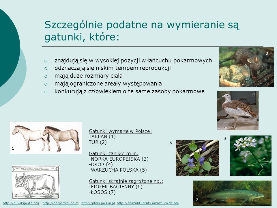 Szczególnie podatne na wymieranie są gatunki, które: znajdują się w wysokiej pozycji w łańcuchu pokarmowych odznaczają się niskim tempem reprodukcji m