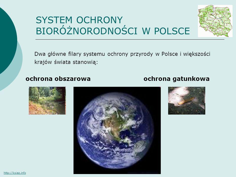 SYSTEM OCHRONY BIORÓŻNORODNOŚCI W POLSCE Dwa główne filary systemu ochrony przyrody w Polsce i większości krajów świata stanowią: ochrona obszarowa oc