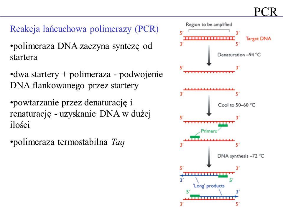 Reakcja łańcuchowa polimerazy (PCR) polimeraza DNA zaczyna syntezę od startera dwa startery + polimeraza - podwojenie DNA flankowanego przez startery