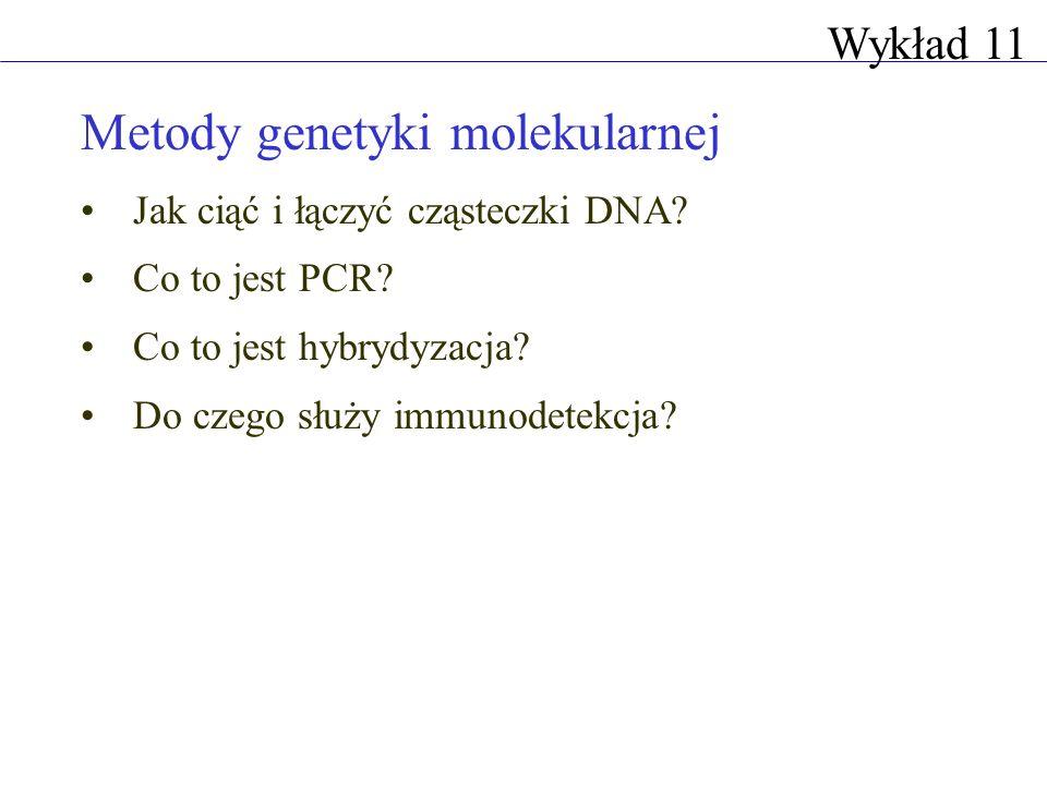 Metody genetyki molekularnej Jak ciąć i łączyć cząsteczki DNA? Co to jest PCR? Co to jest hybrydyzacja? Do czego służy immunodetekcja? Wykład 11