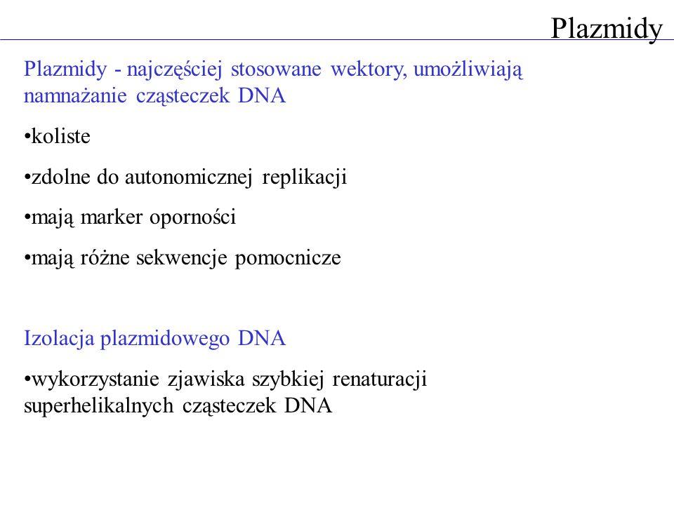 Plazmidy - najczęściej stosowane wektory, umożliwiają namnażanie cząsteczek DNA koliste zdolne do autonomicznej replikacji mają marker oporności mają