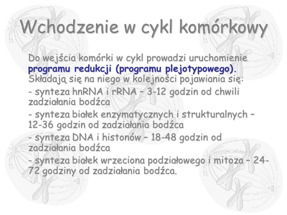 Wchodzenie w cykl komórkowy Do wejścia komórki w cykl prowadzi uruchomienie programu redukcji (programu plejotypowego). Składają się na niego w kolejn