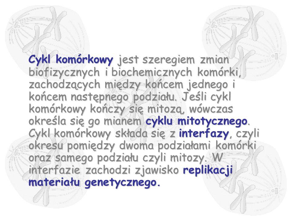 Telofaza chromosomy potomne rozkręcają się tworząc znów chromatynęchromosomy potomne rozkręcają się tworząc znów chromatynę odtwarzają się jąderkaodtwarzają się jąderka wokół każdego ze skupień chromatyny odtwarza się błona jądrowawokół każdego ze skupień chromatyny odtwarza się błona jądrowa