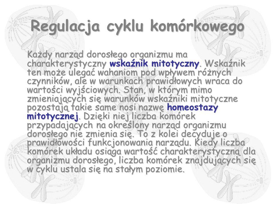 Regulacja cyklu komórkowego Każdy narząd dorosłego organizmu ma charakterystyczny wskaźnik mitotyczny. Wskaźnik ten może ulegać wahaniom pod wpływem r