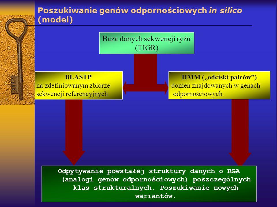 Poszukiwanie genów odpornościowych in silico (model) Baza danych sekwencji ryżu (TIGR) BLASTP na zdefiniowanym zbiorze sekwencji referencyjnych HMM (o