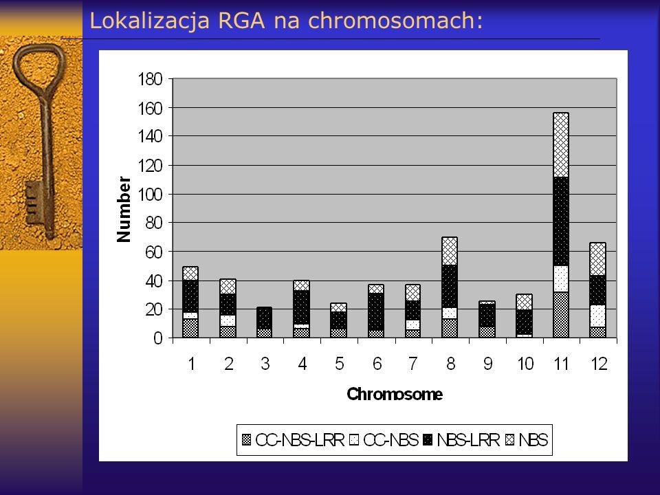 Lokalizacja RGA na chromosomach:
