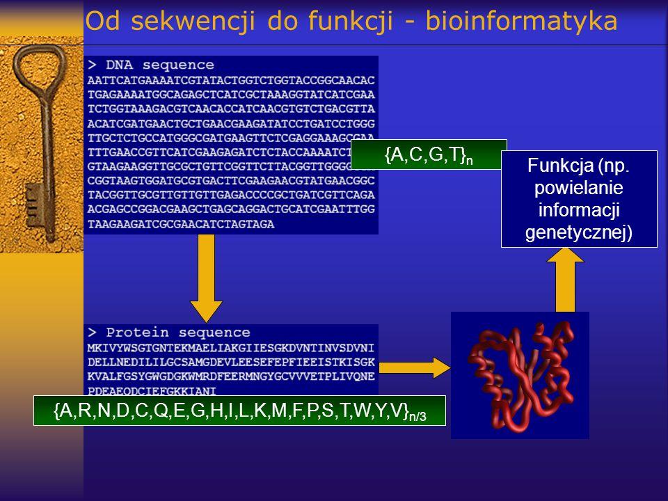 Od sekwencji do funkcji - bioinformatyka {A,C,G,T} n {A,R,N,D,C,Q,E,G,H,I,L,K,M,F,P,S,T,W,Y,V} n/3 Funkcja (np. powielanie informacji genetycznej)