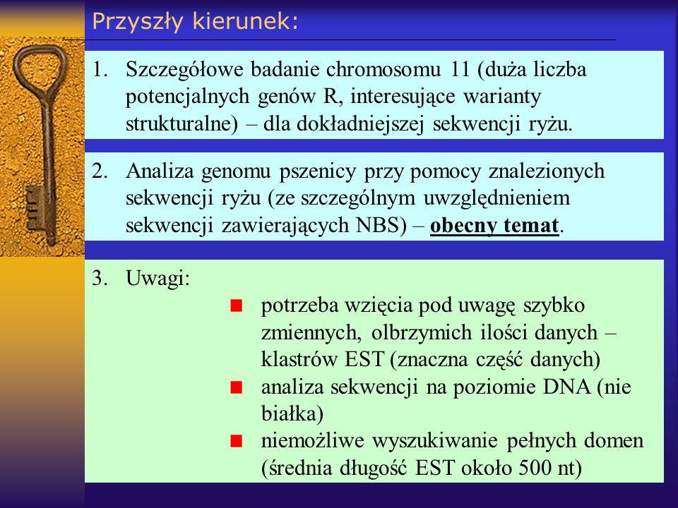 Przyszły kierunek: 2.Analiza genomu pszenicy przy pomocy znalezionych sekwencji ryżu (ze szczególnym uwzględnieniem sekwencji zawierających NBS) – obe