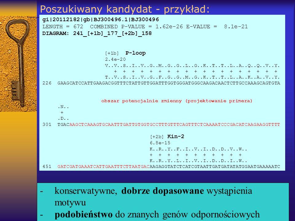 Poszukiwany kandydat - przykład: gi|20112182|gb|BJ300496.1|BJ300496 LENGTH = 672 COMBINED P-VALUE = 1.62e-26 E-VALUE = 8.1e-21 DIAGRAM: 241_[+1b]_177_