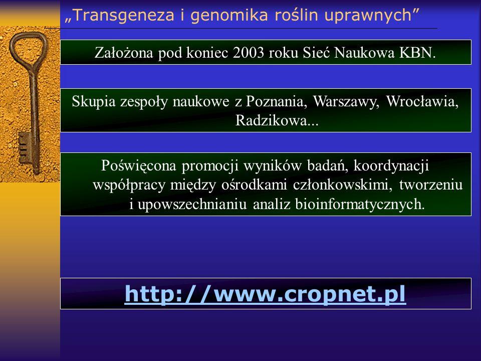 Transgeneza i genomika roślin uprawnych Założona pod koniec 2003 roku Sieć Naukowa KBN. Skupia zespoły naukowe z Poznania, Warszawy, Wrocławia, Radzik