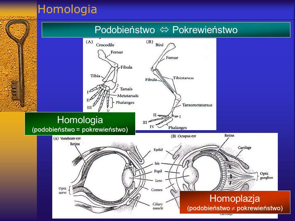 Homologia Podobieństwo Pokrewieństwo Homologia (podobieństwo = pokrewieństwo) Homoplazja (podobieństwo pokrewieństwo)